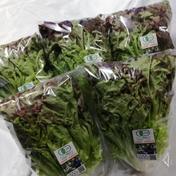 【兵庫県産】有機リーフレタス 5袋(750g前後) 5袋(750g前後) 野菜(レタス) 通販