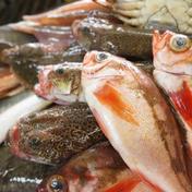 朝どれ氷見産鮮魚の詰め合わせ ノドグロ入り 魚種による 富山県 通販