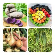 【数量限定】【数量限定】旨い野菜!最後の夏をお届けセット!農薬不使用 固定種 自然栽培 じゃがいも1.5キロくらい夏野菜はその時に採れた量により美味しいものを! 広島県 通販