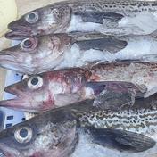 漁師の店 スケソウダラ 鍋セット 2㎏