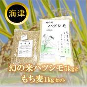 幻の米ハツシモ5kgともち麦1kgセット 精米5kg、精麦1kg 果物や野菜などのお取り寄せ宅配食材通販産地直送アウル