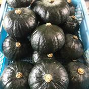 栗駒山農林社のイチ押しかぼちゃ。 約1.8kg/個 野菜(かぼちゃ) 通販