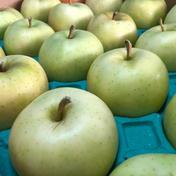 家庭用 トキりんご 箱込み5キロ 果物や野菜などのお取り寄せ宅配食材通販産地直送アウル