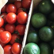 田辺農園 コラボ企画、幻の柑橘「木酢」+「ミニトマト」セット各500g入 木酢500g、ミニトマト500g、合計1k入