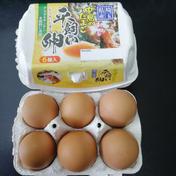アスタキサンチンを飼料に添加 「平飼い卵」 赤卵 6個入り✖️4パック 6個入り✖️4パック 卵(鶏卵) 通販