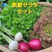 たっぷりレタスの新鮮サラダセット 80サイズ 果物や野菜などのお取り寄せ宅配食材通販産地直送アウル