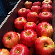【信州産りんご家庭用】約3kg陽光 約3kg 果物や野菜などのお取り寄せ宅配食材通販産地直送アウル
