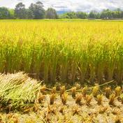 《一等米》農薬8割減【ななつぼし】美味しさに定評有り!10kg(玄米) 10kg(玄米) 米(玄米) 通販