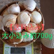 【送料込み】少々訳有り ジャンボにんにく 約700g 野菜(にんにく) 通販