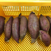 千葉県佐倉市産のさつまいも(紅はるか) 3㎏ 野菜(さつまいも) 通販