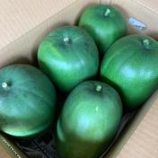 冬瓜 4〜6個(8kg前後) 約8kg 新潟県 通販