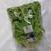 【兵庫県産】有機リーフレタス(150g前後) 1袋(150g前後) 野菜(レタス) 通販