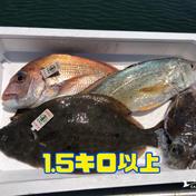 【瀬戸内海】岡山県産の鮮魚ボックス2〜4種1.5キロ以上 1.5キロ以上 岡山県 通販