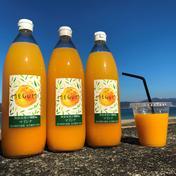 【数量限定】マドンナジュース 1000ml 3本 1000ml 3本 飲料(ジュース) 通販