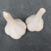 【Mサイズ】阿部農園のにんにく 1kg 野菜(にんにく) 通販