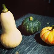 ★数量限定★化学農薬不使用カボチャ:バターナッツ・プッチーニ・坊ちゃんのセット カボチャ3個 野菜(かぼちゃ) 通販