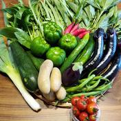 野菜を食べて笑顔になろう!季節の野菜セット8~10品種 80サイズ5㎏以内 石川県 通販