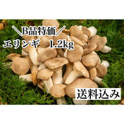 農家直送!エリンギ1.2kg 1.2kg 野菜(きのこ) 通販