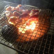 うま味凝縮!かたい親鶏セット 土佐ジローと赤鶏ミンチ 鶏肉 親かしわ 高知県 通販