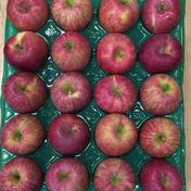 紅花ふじ20玉5㎏家庭用 5.2㎏ 果物や野菜などのお取り寄せ宅配食材通販産地直送アウル