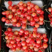 訳あり さくらんぼ 1キロ 1kg 果物(さくらんぼ) 通販