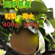 長野県産 和梨【南水】大玉3.5キロ 3.5キロ 果物 通販