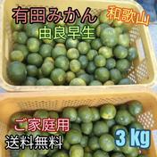 有田みかん🍊由良早生 3S〜Lサイズ混合 北海道・沖縄への配送ができません。ご了承ください。 3kg (箱込) 果物(みかん) 通販