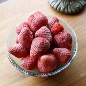 美味しさそのまま急速冷凍!ぜいたくフローズンいちご(1㎏) 1㎏ 果物や野菜などのお取り寄せ宅配食材通販産地直送アウル