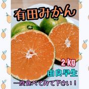 有田みかん🍊由良早生 4S〜Lサイズ混合 北海道・沖縄のへの配送ができません。ご了承ください。 2kg(箱込) 果物(みかん) 通販