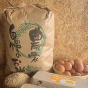 【新米】減農薬コシヒカリ玄米(10kg) 10kg 千葉県 通販