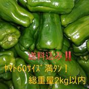 【送料込み】ピーマンいっぱい! 1.6~1.9kg位 果物や野菜などのお取り寄せ宅配食材通販産地直送アウル