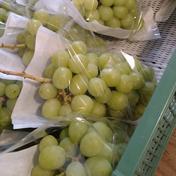 【家庭用】シャインマスカット  約1-1.2キロ 果物(ぶどう) 通販
