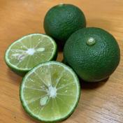 主井農園 すだち1kg(お試し用) 1kg 果物(柑橘類) 通販