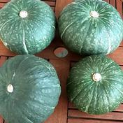 ★数量限定★化学農薬不使用カボチャ:栗カボチャ4種類各1個、合計4個のセット 栗カボチャ4個、合計約6.2~7.5kg相当 野菜(かぼちゃ) 通販