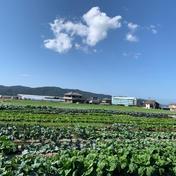 島の恵♡季節の野菜セット 8〜10種類の野菜 野菜(セット・詰め合わせ) 通販