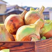 【ちょっと訳あり】淡路島産 新玉ねぎ 5kg  5kg 野菜(玉ねぎ) 通販