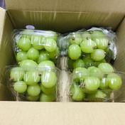 シャインマスカット約200g×4パック 少量小分け粒サイズ不揃い 数量限定 約200g×4パック 果物(ぶどう) 通販