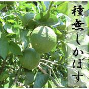 あおやぎ農場 無農薬で栽培している種無しカボス2キロ 2キロ