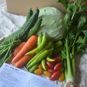 【鮮度抜群!】さいのね畑の野菜セット[小](農薬・化学肥料不使用) 季節のお野菜約7品 ※1〜2人家族の1週間分の量を想定 果物や野菜などのお取り寄せ宅配食材通販産地直送アウル