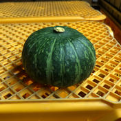 石川県珠洲産 エビスカボチャ 20kg 野菜(かぼちゃ) 通販