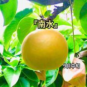 梨 南水 良品 約10kg(24個〜28個) 1箱 約10kg (24個〜28個) 果物(梨) 通販