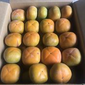 送料無料!![訳あり]和歌山県産たねなし柿約7kg 約7kg 果物(柿) 通販
