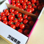 山七農園のミニトマト 3kg 果物や野菜などのお取り寄せ宅配食材通販産地直送アウル