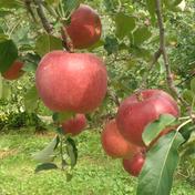 【お試し】紅いわて約3kg【ちょこっとキズ】 約3kg(8~11玉) 果物 通販