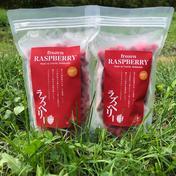 無農薬栽培 珍しい国産のラズベリー 1kg 果物 通販