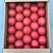 【A品】赤採りトマト1箱(4kg箱満杯) 1箱(4kg箱満杯) 野菜(トマト) 通販