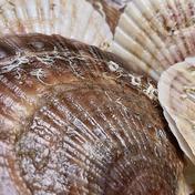 漁師の店 養殖ホタテ2年貝極上特Aサイズ4キロ 4kg