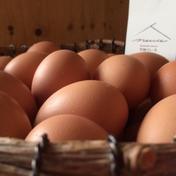【北海道発西日本向け・送料込】平飼い鶏の有精卵「ぽんあびらん」60個セット【送り先が中部・北陸地方以西の方】 60個 卵(鶏卵) 通販