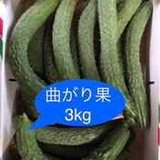曲がり果・3kg 約3kg 野菜(きゅうり) 通販