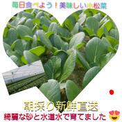 毎日食べよう新鮮小松菜❗ 1㎏ 5袋~6袋 大阪府 通販